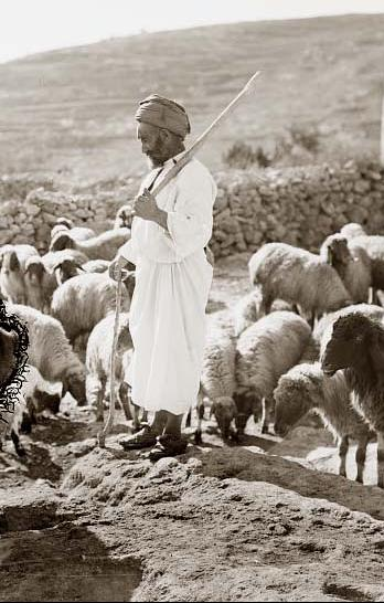 Historical Photographs Gt Gt A Shepherd Standing Among His